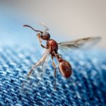 How do find out the possible ways to prevent flying ants' entry?